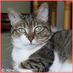 Tekila, mon 1er chat